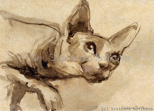Sphynx cat #41 ink painting Svetlana Novikova (large view)