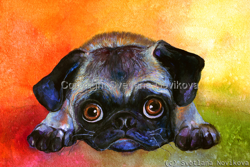 Pug Dog #1 painting Giclee Print (large view)