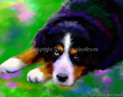 Bernese Dog (large view)