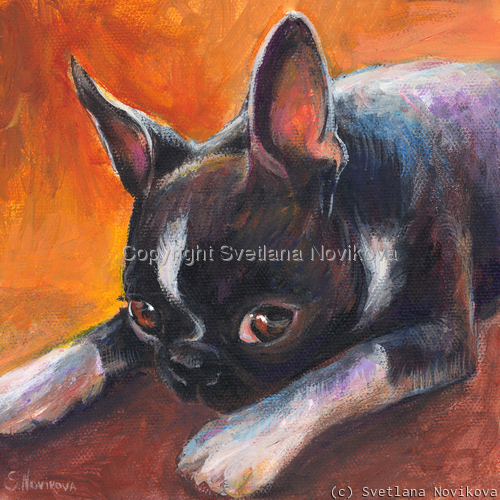 Boston Terrier #3 (large view)