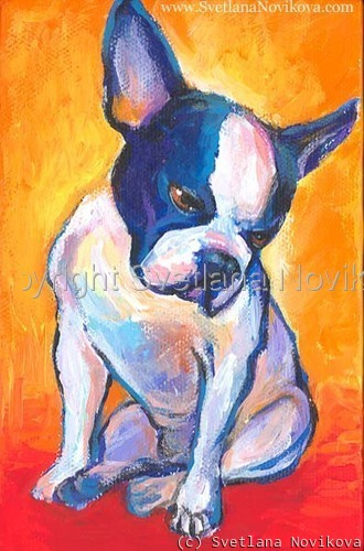 Pensive boston terrier (large view)