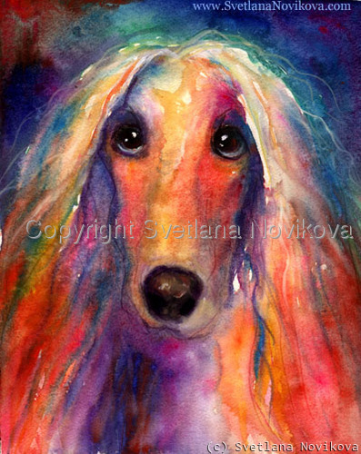 Afghan Dog watercolor (large view)