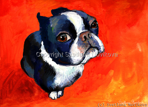 boston terrier # 1 painting Giclee Print (large view)