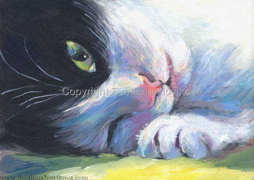 Tabby cat tuxedo sleepy (large view)