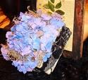 Purple Hydrangea in a Box