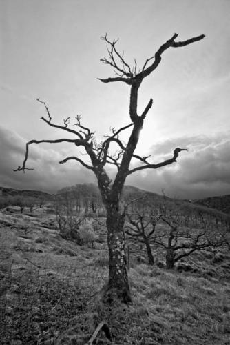 LANDSCAPE #10 by Sylvia Patton Photography