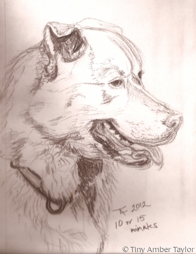 Pencil sketch of a dog (large view)