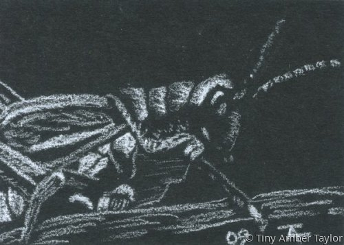 Grasshopper ACEO (large view)