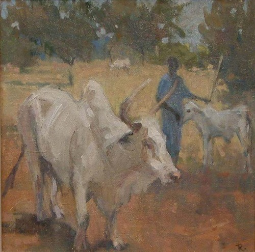Cows, The Gambia