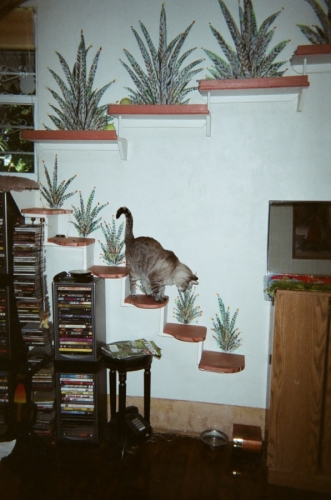 Cat Landing