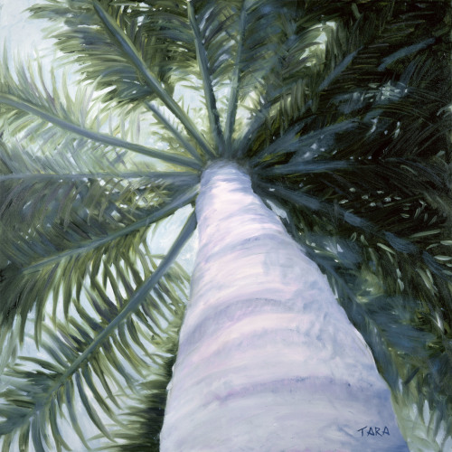 A Royal Palm (things are looking up) by TARA O'Neill