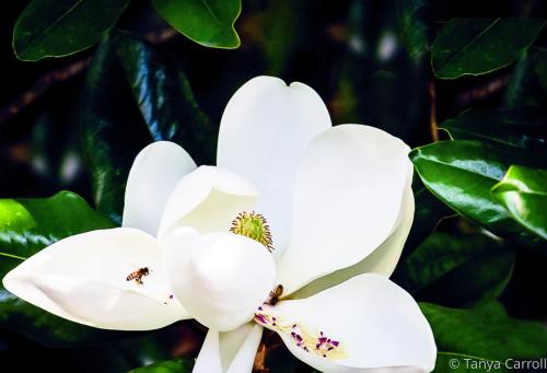 Blossom by Tanya Carroll Photography