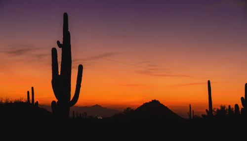 Saguaro Sunset (BEST SELLER) by Tony Cottrell