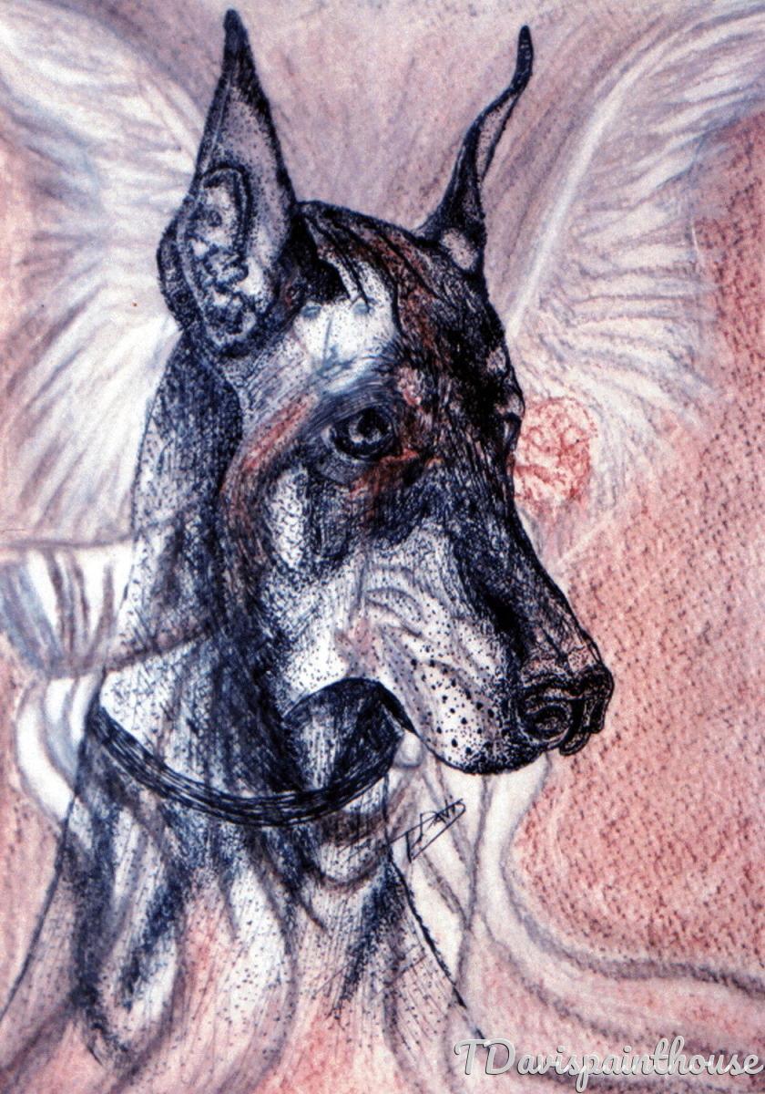 Custom Doberman Portrait Pen-Ink and Pastel, Memory Portrait (large view)