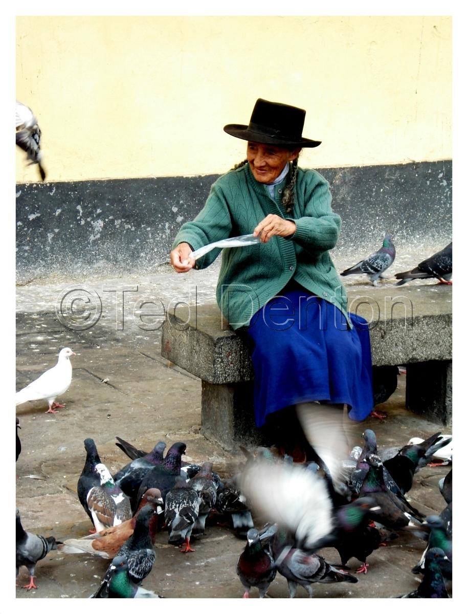 Feeding pigeons, photography, Lima, Peru (large view)