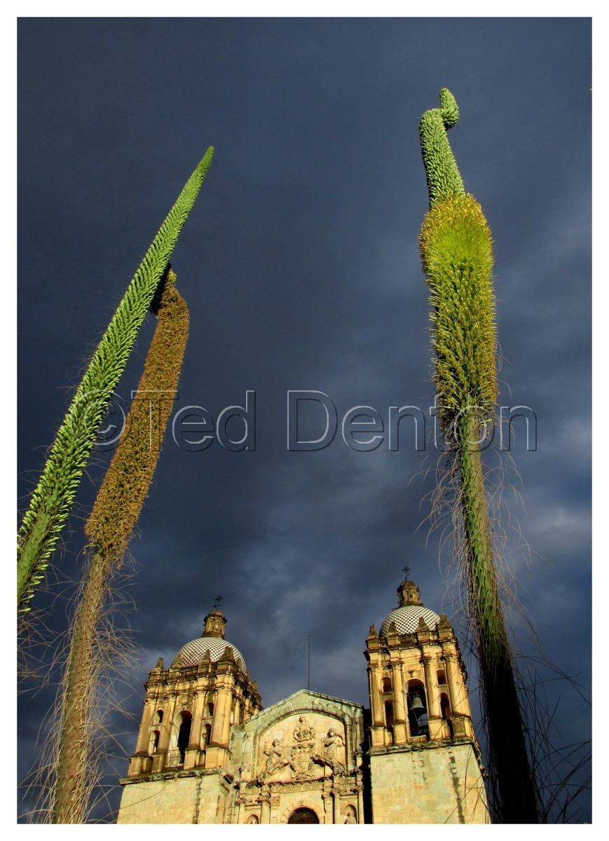 Santo Domingo, Oaxaca (large view)