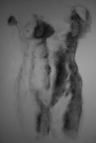 Torso in Charcoal by Thomasin Dewhurst