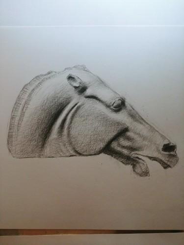 Elgin Marble Horse