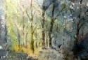 Weatherly woods (thumbnail)