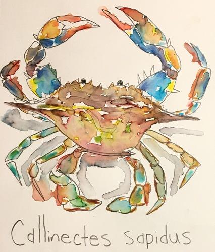 Blue Crab part 2