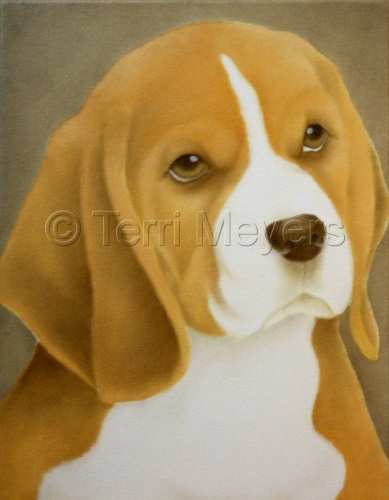 Tan Beagle Dog