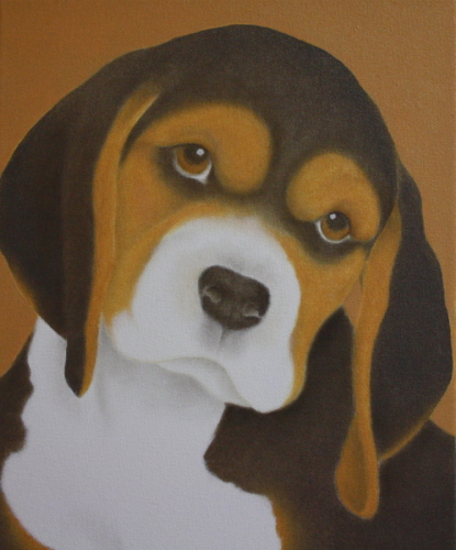 Black & Tan Beagle Dog