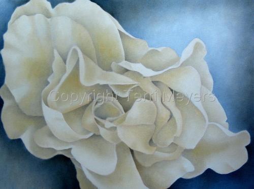 Cream Rose I