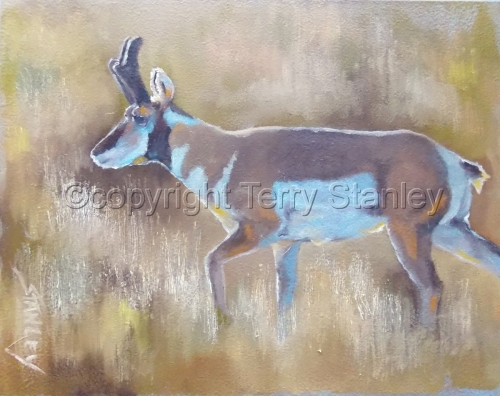 Pronghorn Antelops by Art by Terry Howell Stanley