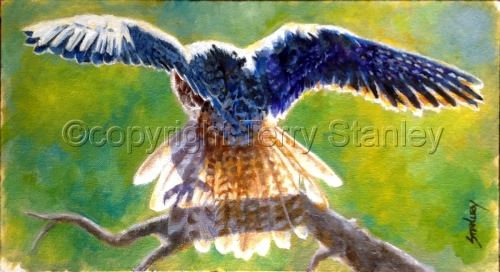 The Landing (Prairie Falcon) by Art by Terry Howell Stanley