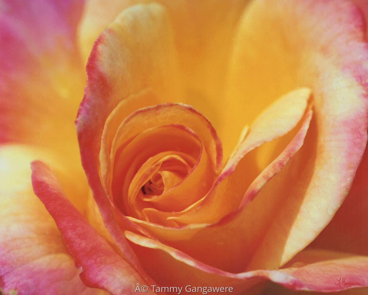 Rose Art (large view)