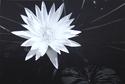 Water Lily (thumbnail)