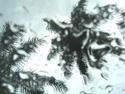 Rainy Palms (thumbnail)