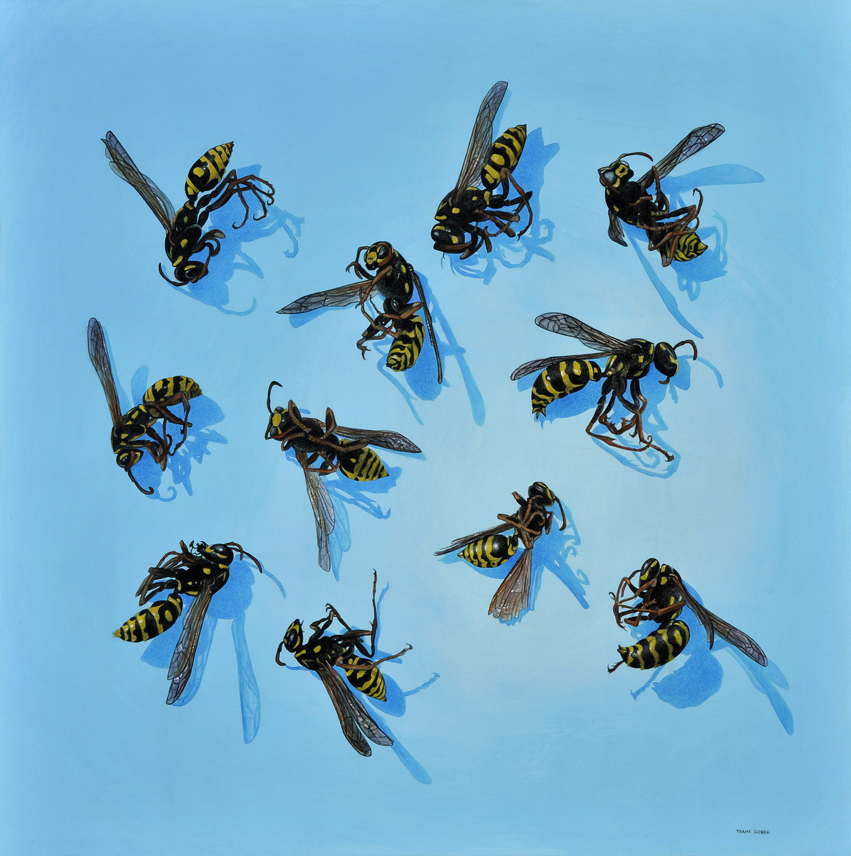 Eleven Wasps (large view)