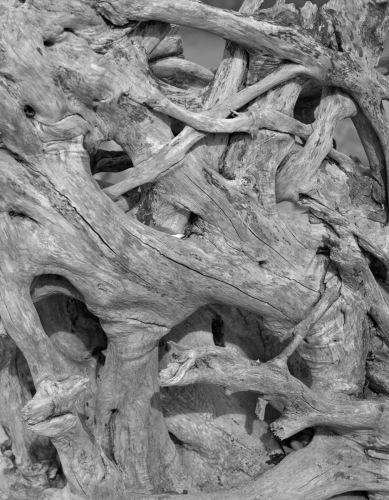 Driftwood Tangle