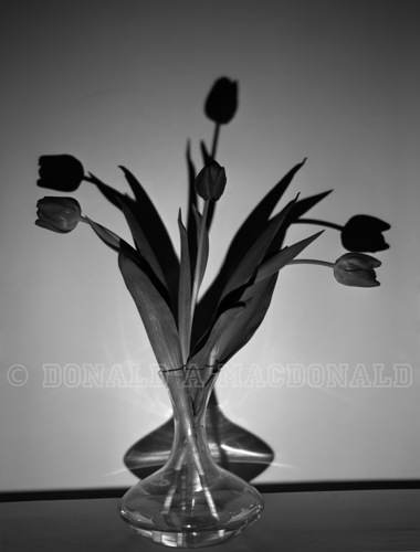 Decanter of Tulips