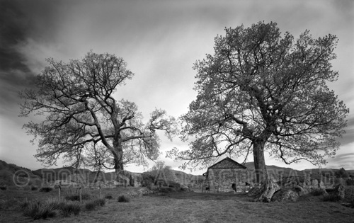 Barn & Two Trees