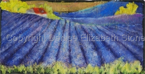 First Light, Lavender Fields