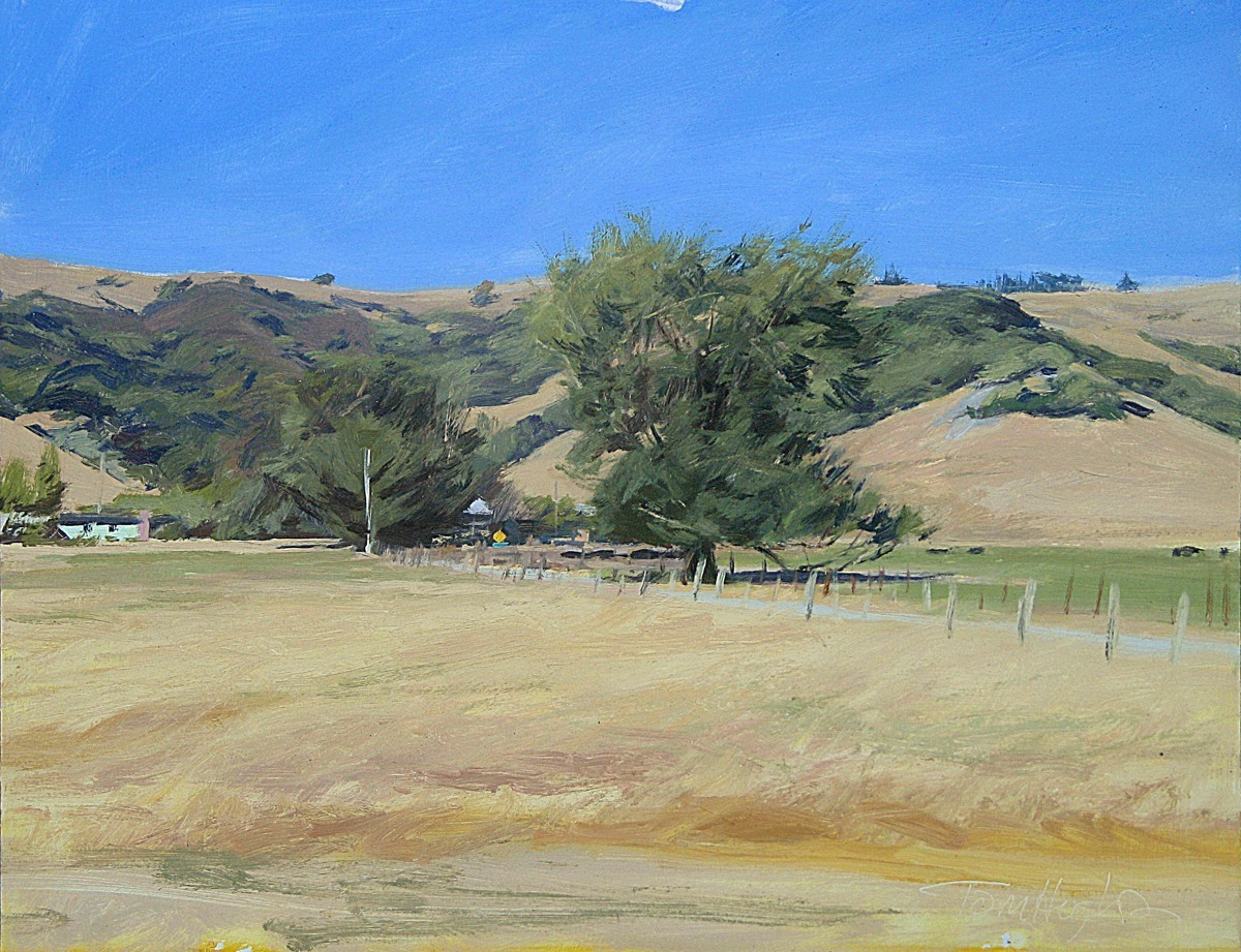 Marin hills, summer (large view)