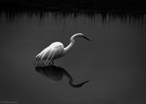 Water White Bird 1