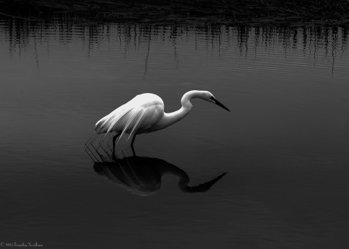 Water White Bird 2