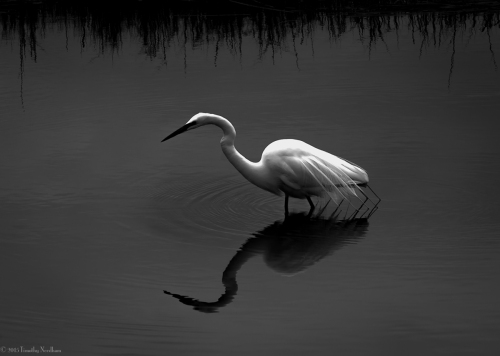 Water White Bird 3