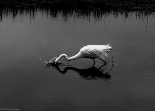 Water White Bird 4