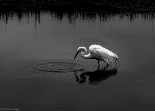 Water White Bird 5