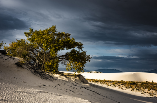 Tree in the White Sand