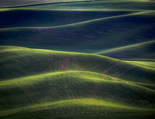 Tracks in the Palouse