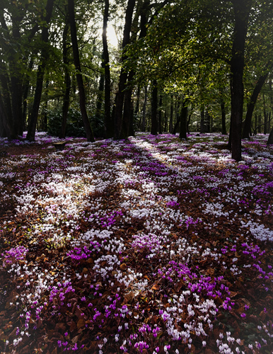 Forest carpet