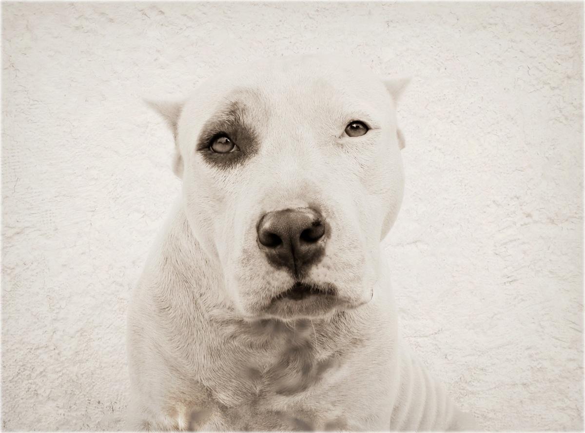Eye Dog (large view)