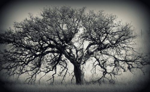 HISTORY OF A TREE (large view)