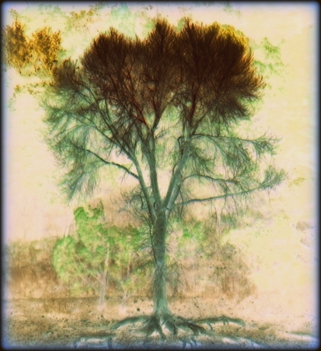 TREESPIRIT (large view)