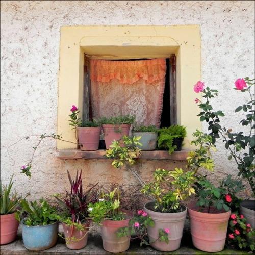 TIA'S WINDOW